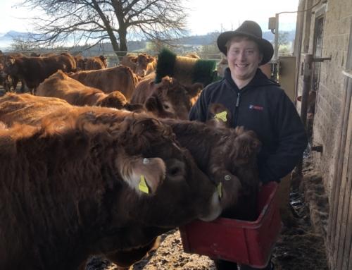 Aide digitale dans un troupeau d'élevage