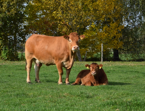 Info Heft Swiss Limousin 2020